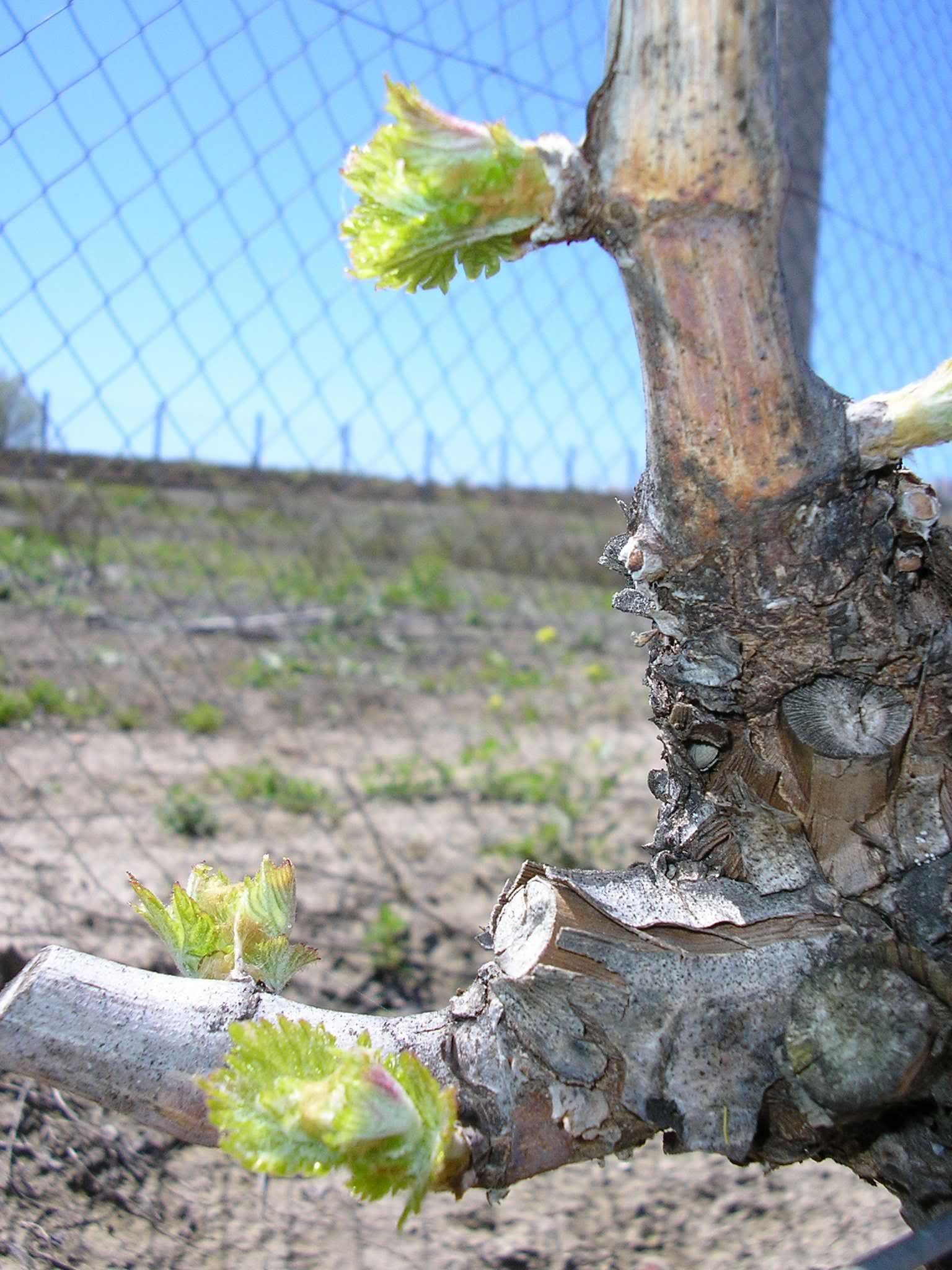 Primavera en Montilla