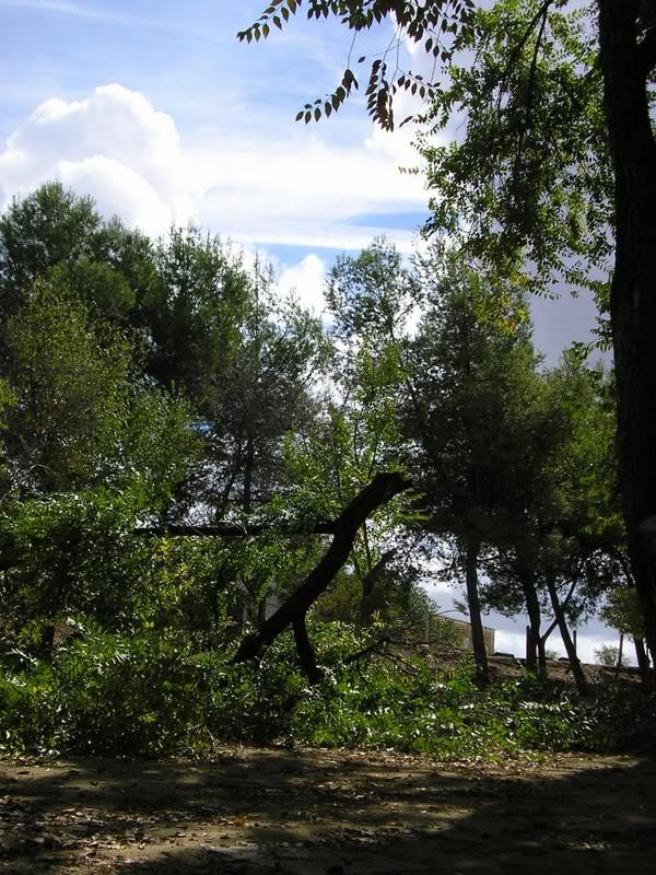 Árbol caído en el parque tierno galván